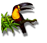 upload/579-toucan02.png